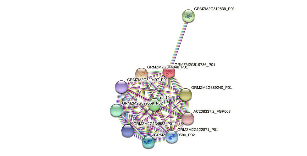 GRMZM2G519736_P01 protein (Zea mays) - STRING interaction network