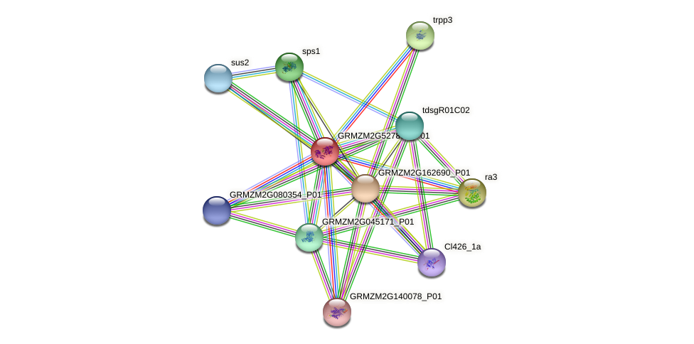 GRMZM2G527891_P01 protein (Zea mays) - STRING interaction network