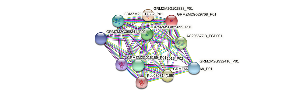 GRMZM2G529768_P01 protein (Zea mays) - STRING interaction network