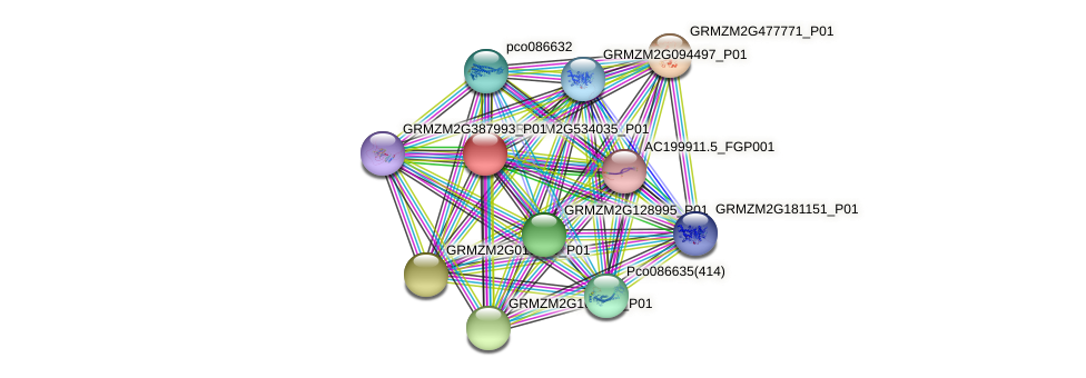 GRMZM2G534035_P01 protein (Zea mays) - STRING interaction network
