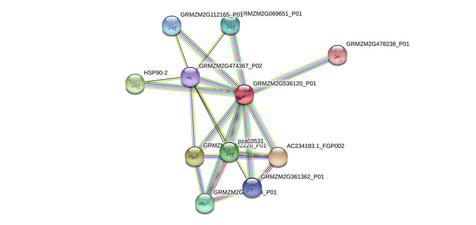 GRMZM2G536120_P01 protein (Zea mays) - STRING interaction network