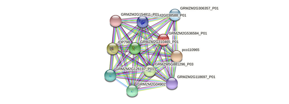 GRMZM2G536584_P01 protein (Zea mays) - STRING interaction network