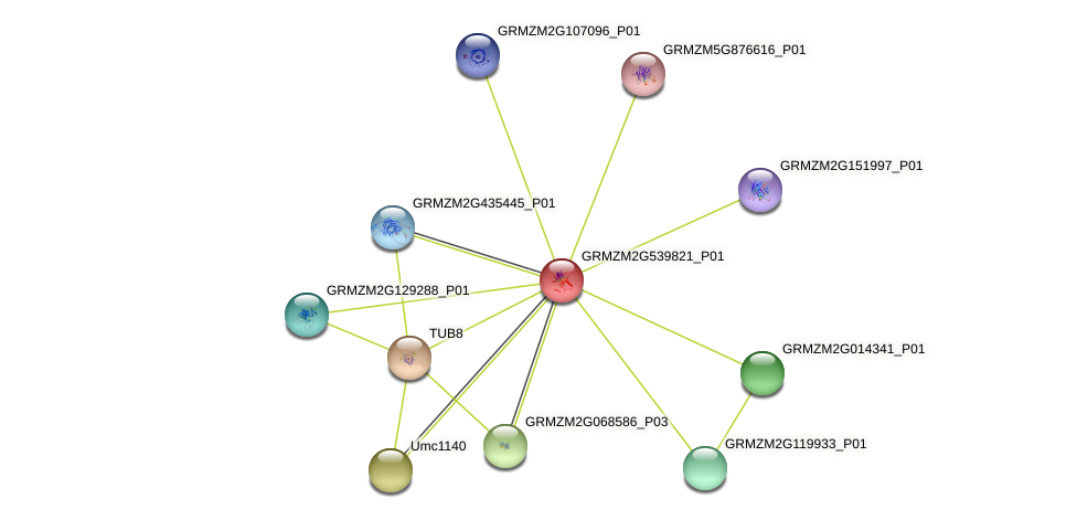 GRMZM2G539821_P01 protein (Zea mays) - STRING interaction network