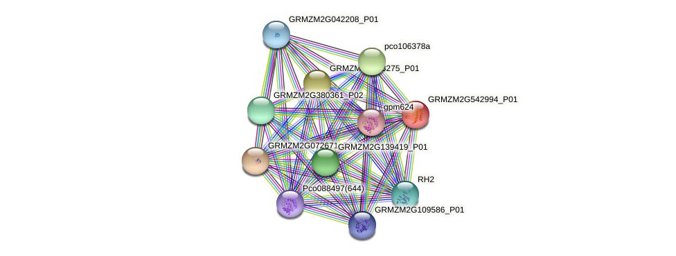 GRMZM2G542994_P01 protein (Zea mays) - STRING interaction network
