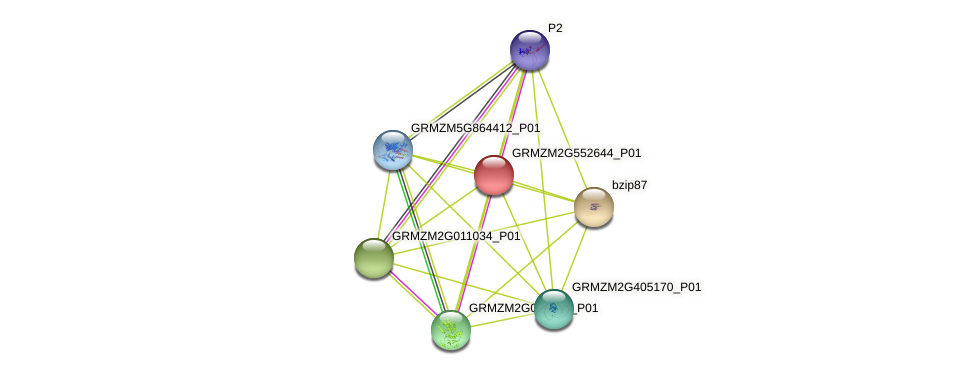 GRMZM2G552644_P01 protein (Zea mays) - STRING interaction network