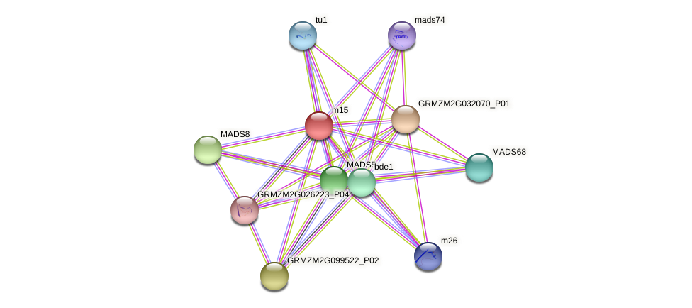 m15 protein (Zea mays) - STRING interaction network