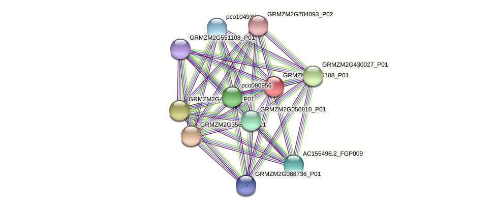 GRMZM2G555108_P01 protein (Zea mays) - STRING interaction network