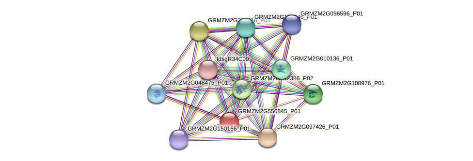 GRMZM2G556845_P01 protein (Zea mays) - STRING interaction network