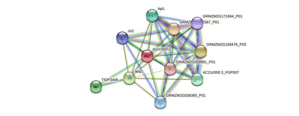 pco100812 protein (Zea mays) - STRING interaction network