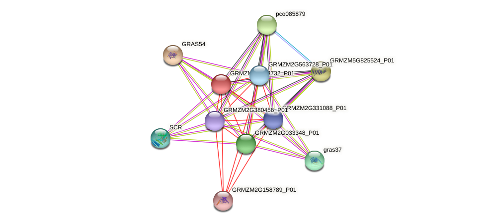 GRMZM2G563732_P01 protein (Zea mays) - STRING interaction network