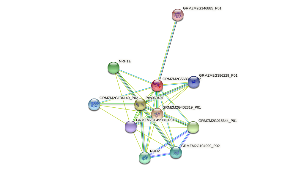GRMZM2G568912_P02 protein (Zea mays) - STRING interaction network