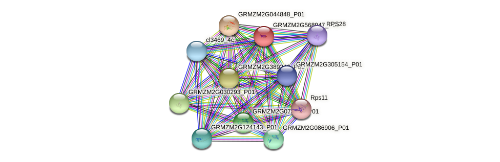 GRMZM2G568947_P01 protein (Zea mays) - STRING interaction network