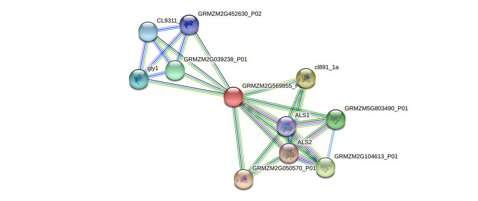 GRMZM2G569855_P01 protein (Zea mays) - STRING interaction network