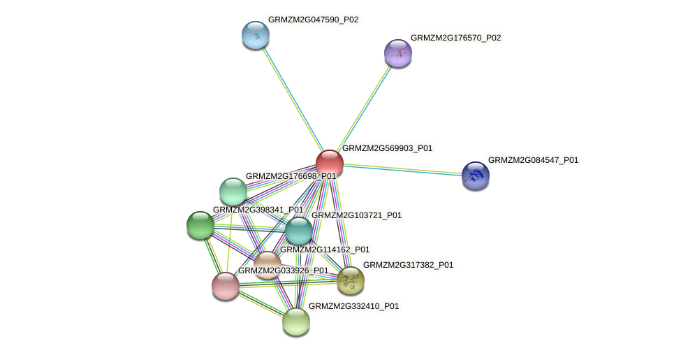 Zm.128436 protein (Zea mays) - STRING interaction network