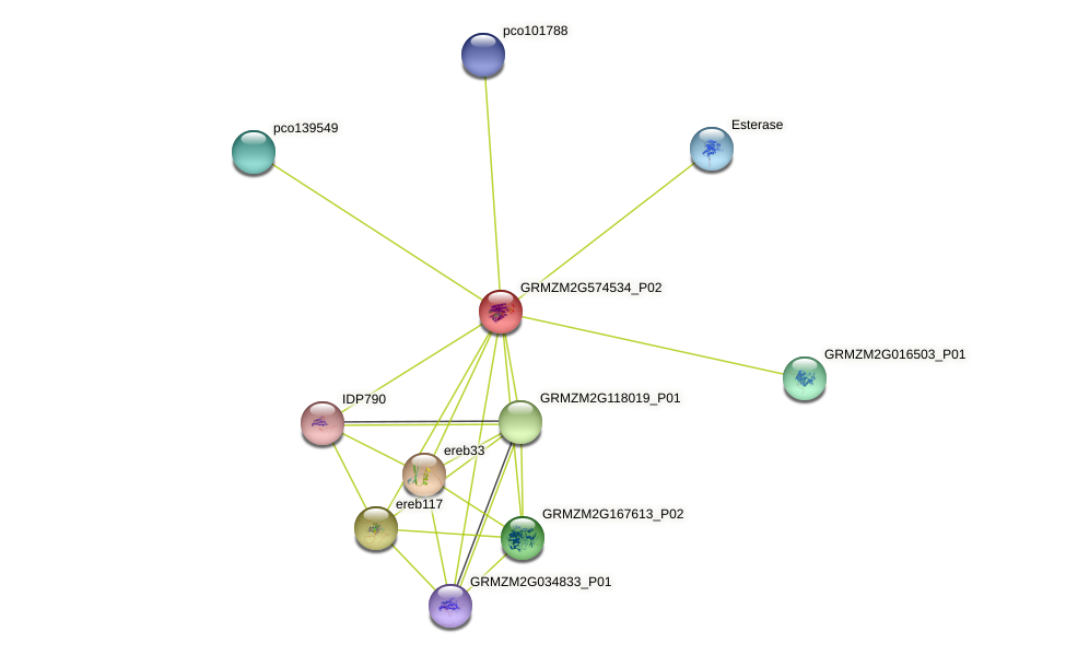 GRMZM2G574534_P02 protein (Zea mays) - STRING interaction network