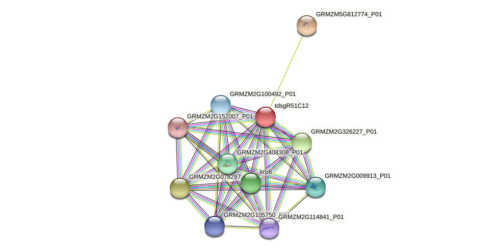 GRMZM2G575566_P03 protein (Zea mays) - STRING interaction network