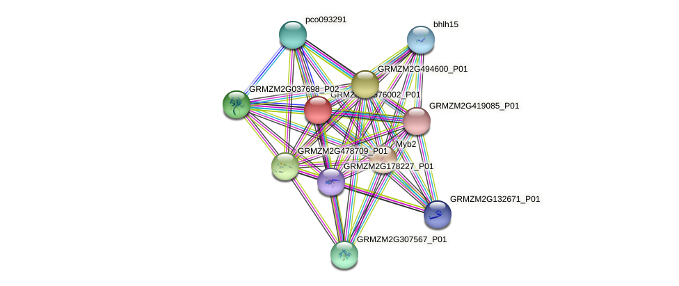 GRMZM2G576002_P01 protein (Zea mays) - STRING interaction network