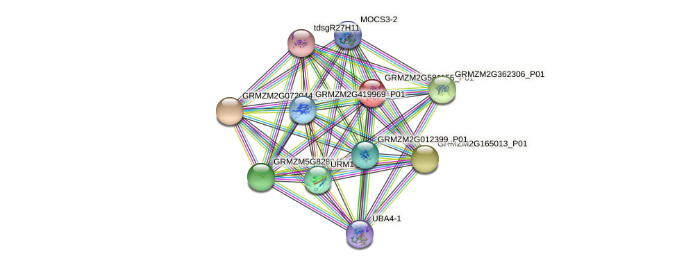 GRMZM2G581155_P01 protein (Zea mays) - STRING interaction network