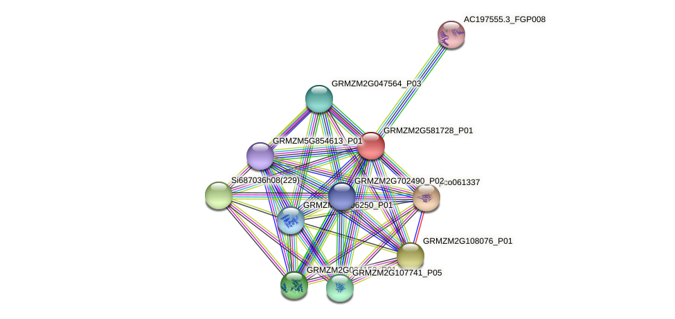 GRMZM2G581728_P01 protein (Zea mays) - STRING interaction network