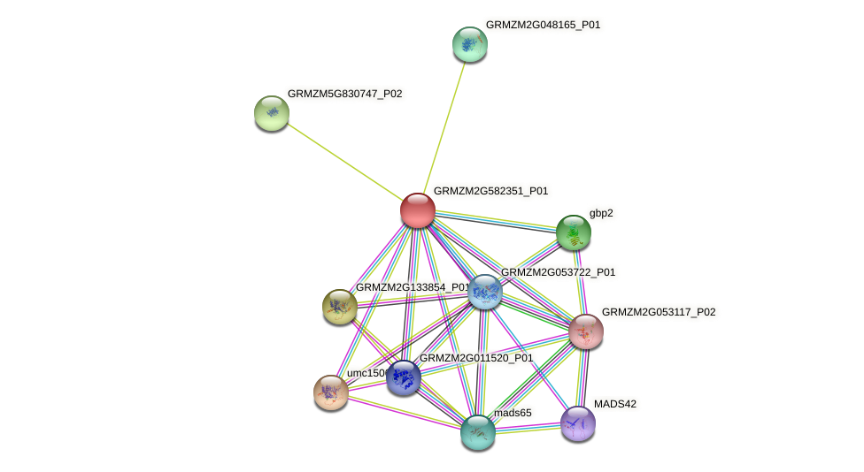 GRMZM2G582351_P01 protein (Zea mays) - STRING interaction network