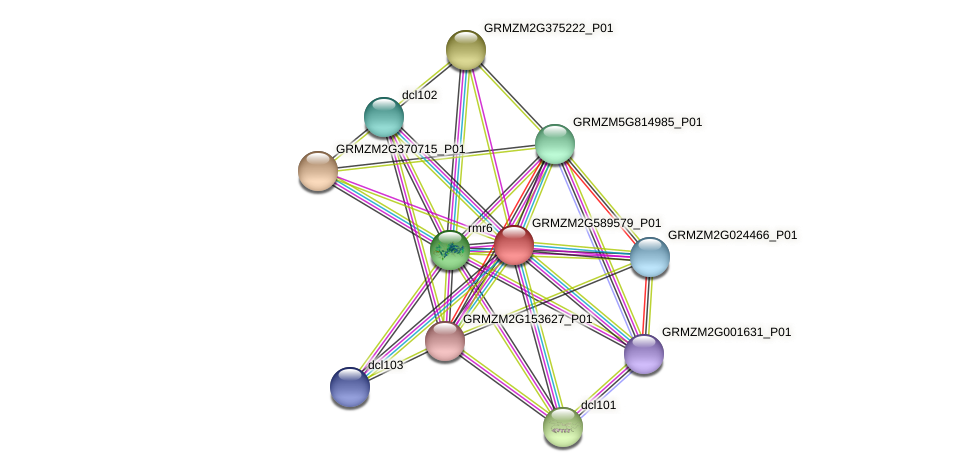 GRMZM2G589579_P01 protein (Zea mays) - STRING interaction network
