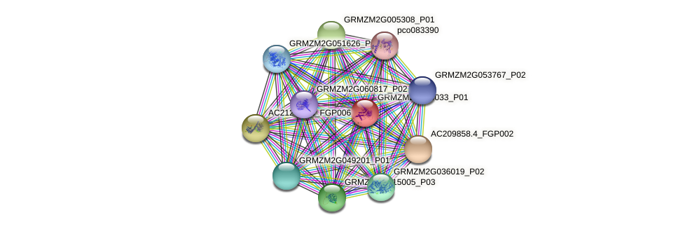 GRMZM2G590033_P01 protein (Zea mays) - STRING interaction network