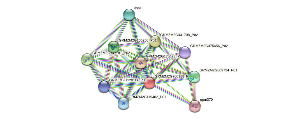 GRMZM2G700188_P05 protein (Zea mays) - STRING interaction network