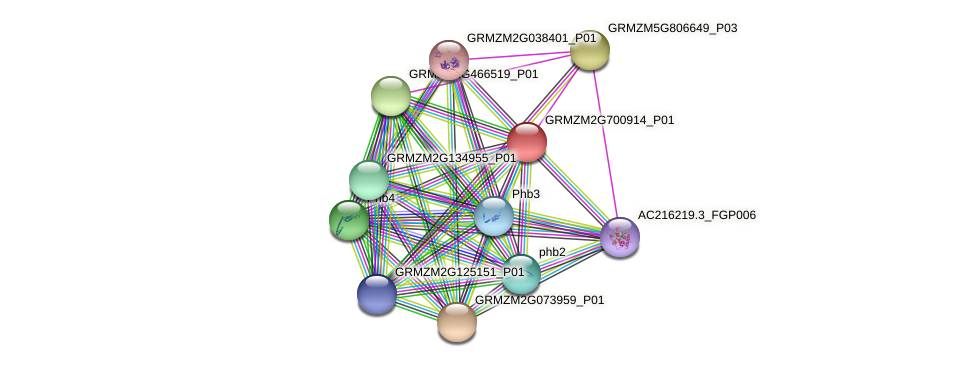 GRMZM2G700914_P01 protein (Zea mays) - STRING interaction network