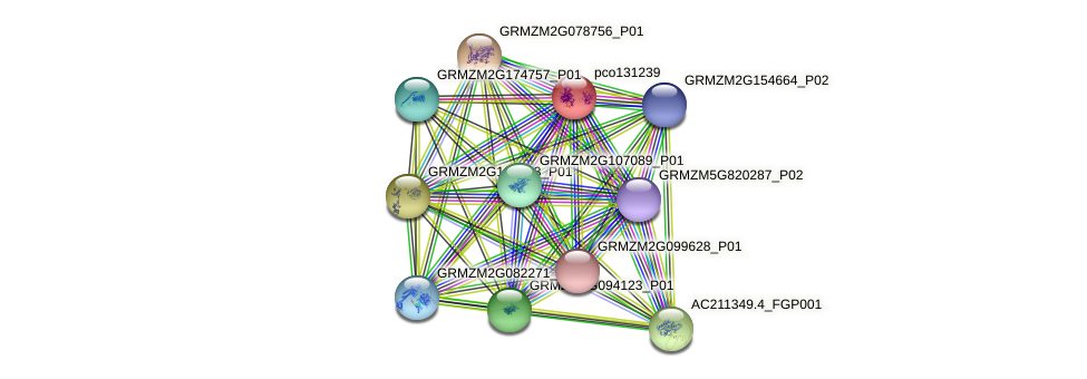 pco131239 protein (Zea mays) - STRING interaction network