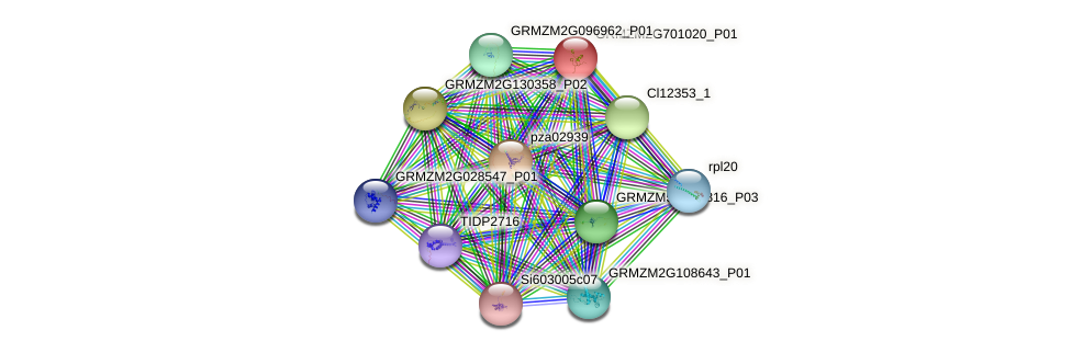 GRMZM2G701020_P01 protein (Zea mays) - STRING interaction network