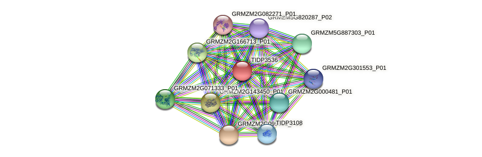TIDP3536 protein (Zea mays) - STRING interaction network