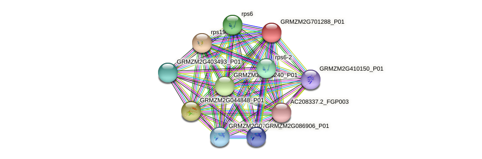 GRMZM2G701288_P01 protein (Zea mays) - STRING interaction network
