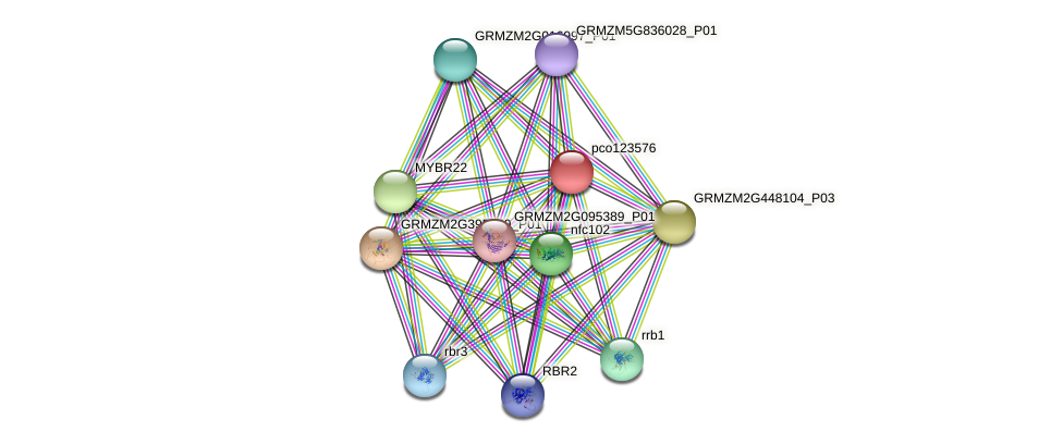 pco123576 protein (Zea mays) - STRING interaction network