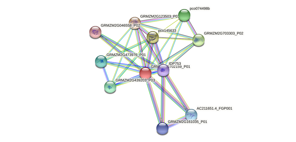 GRMZM2G702159_P01 protein (Zea mays) - STRING interaction network