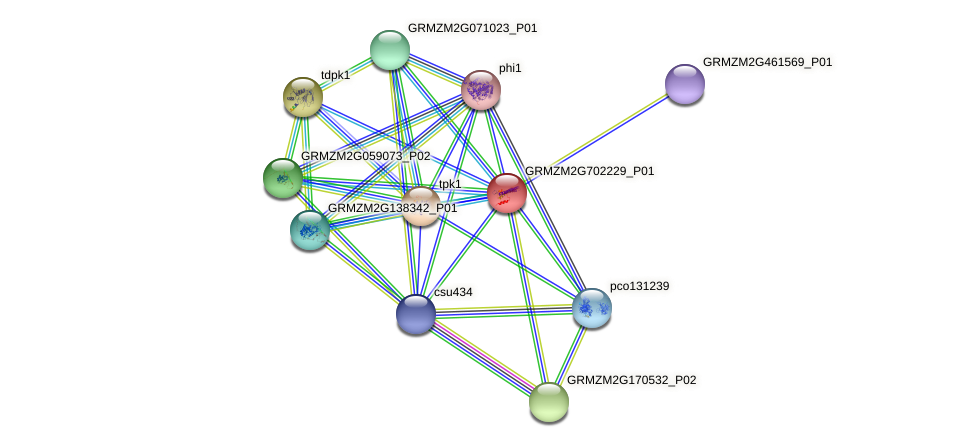 GRMZM2G702229_P01 protein (Zea mays) - STRING interaction network