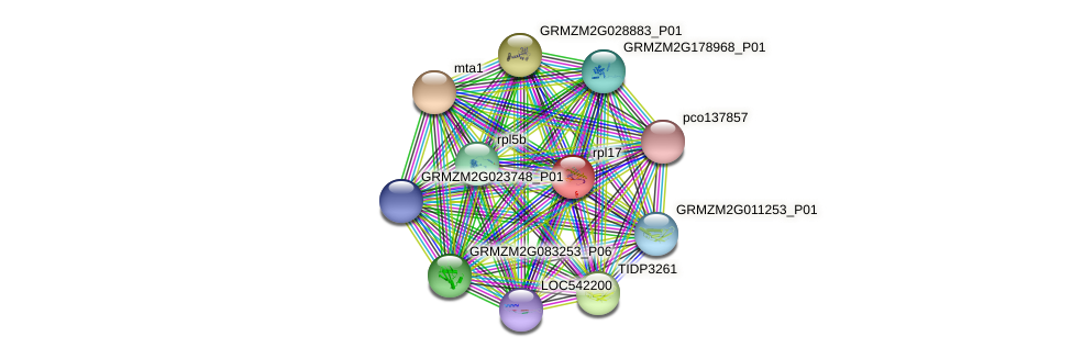 RPL17 protein (Zea mays) - STRING interaction network