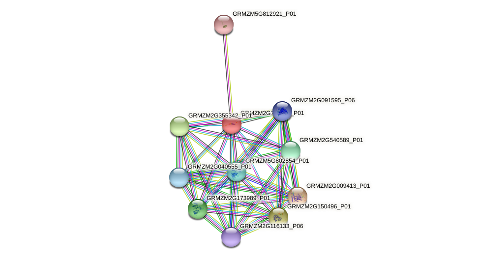 GRMZM2G702725_P01 protein (Zea mays) - STRING interaction network