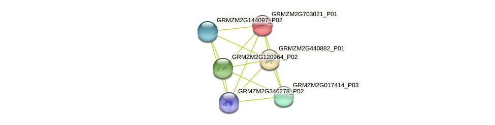GRMZM2G703021_P01 protein (Zea mays) - STRING interaction network