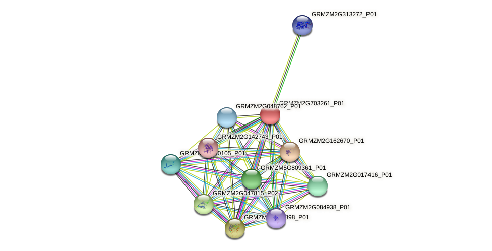 GRMZM2G703261_P01 protein (Zea mays) - STRING interaction network