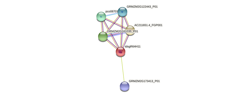 GRMZM2G703293_P01 protein (Zea mays) - STRING interaction network