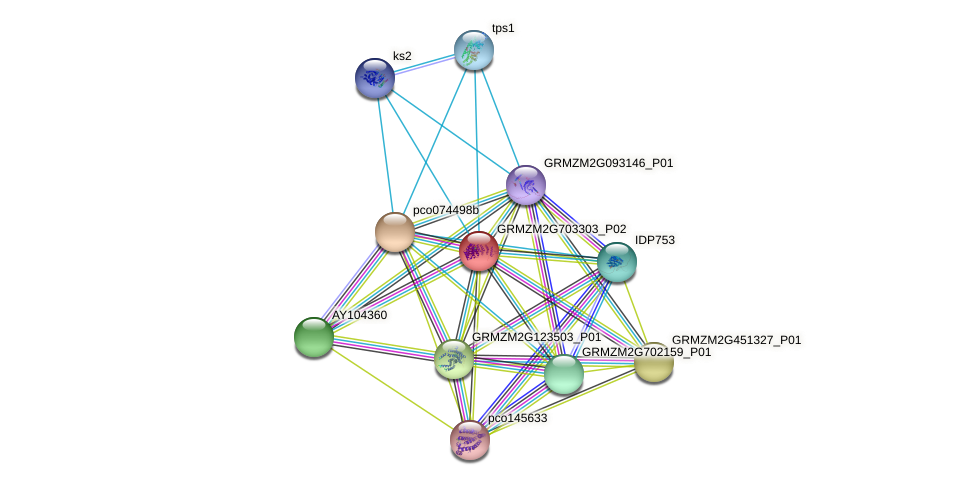GRMZM2G703303_P02 protein (Zea mays) - STRING interaction network