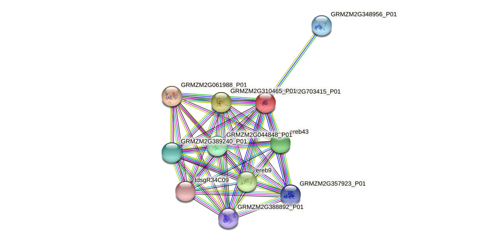 GRMZM2G703415_P01 protein (Zea mays) - STRING interaction network