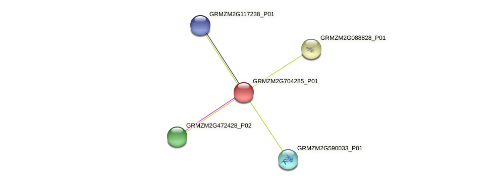 GRMZM2G704285_P01 protein (Zea mays) - STRING interaction network
