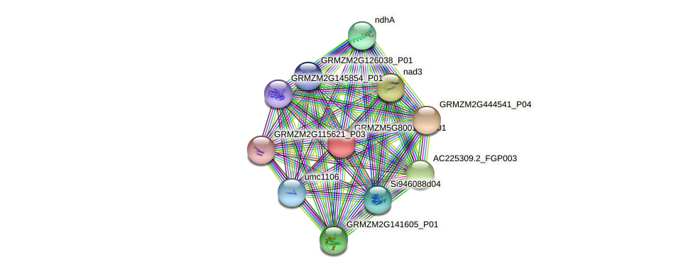 GRMZM5G800101_P01 protein (Zea mays) - STRING interaction network