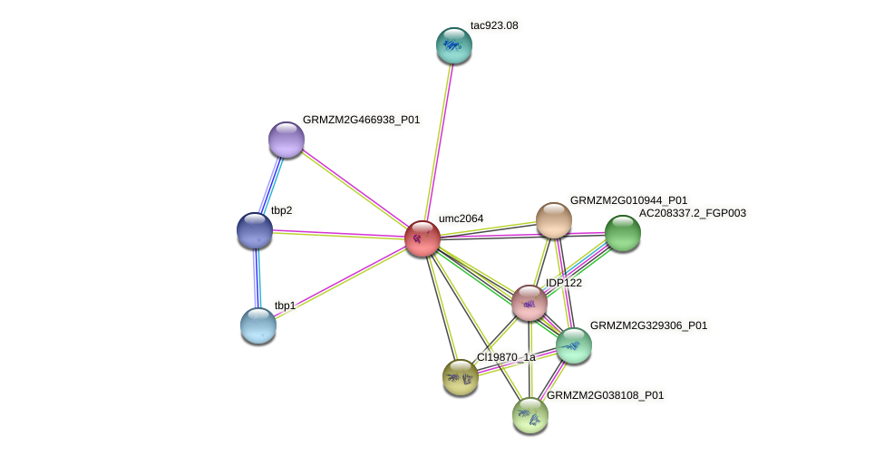 MBF1.3 protein (Zea mays) - STRING interaction network