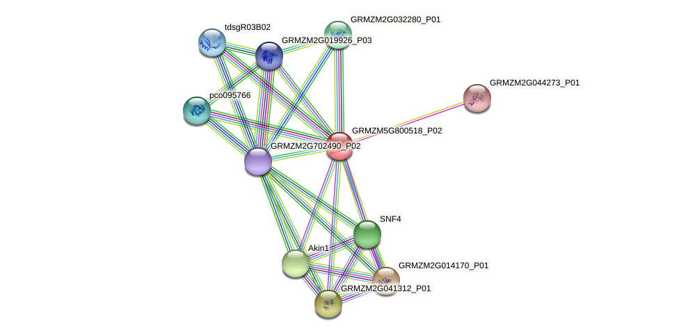 GRMZM5G800518_P02 protein (Zea mays) - STRING interaction network