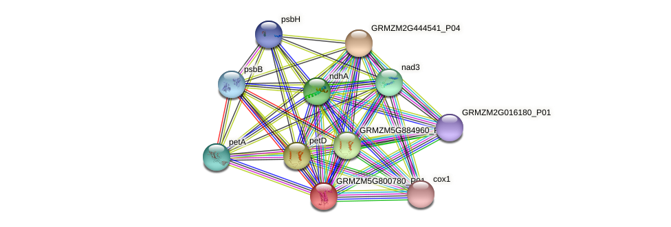 ZemaCp052 protein (Zea mays) - STRING interaction network