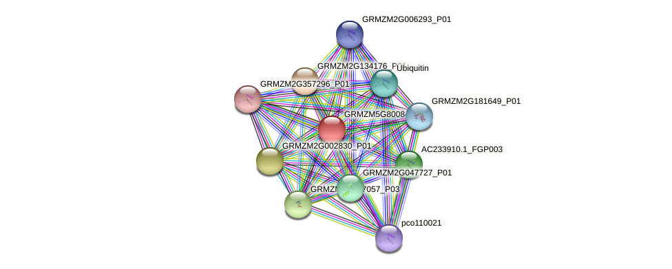 Zm.96813 protein (Zea mays) - STRING interaction network