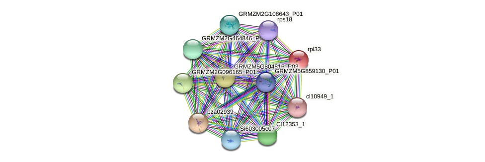 GRMZM5G801074_P01 protein (Zea mays) - STRING interaction network