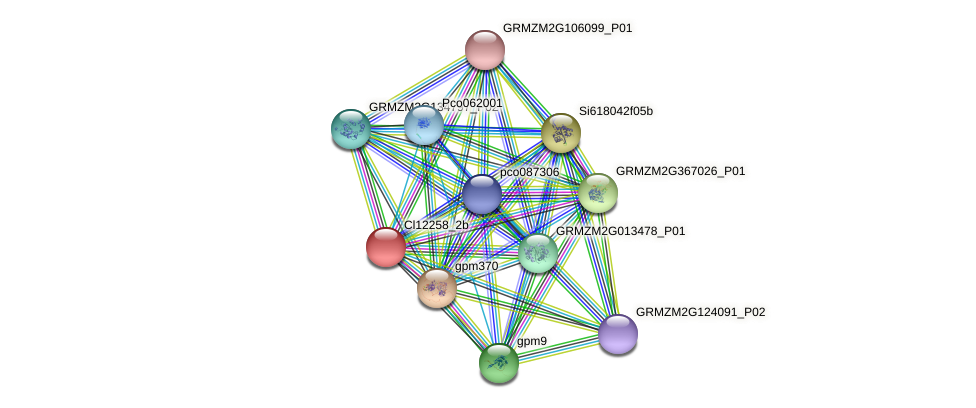 cl12258_2b protein (Zea mays) - STRING interaction network